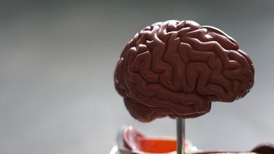Vitalnost možganov ohranjajo vaje za krepitev spomina